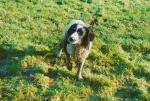 Jake the Farm Dog