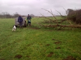 Fallen trees to be sawn up