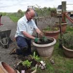 Preserving the oak trees