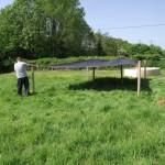 Sunshade and shelter for goslings