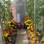 Melplash Show Gardens