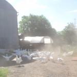 Farm & Campsite