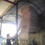 Crabbs Bluntshay Farm