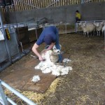 Dorset Farm